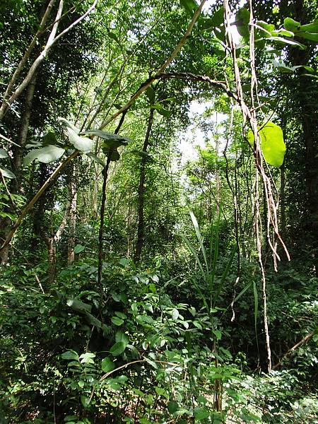 Photo showing tropical forest.