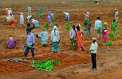 Photo showing Alignment and planting in SMM Komitibanda.  Photo: Forest College & Research Institute, Telangana, India