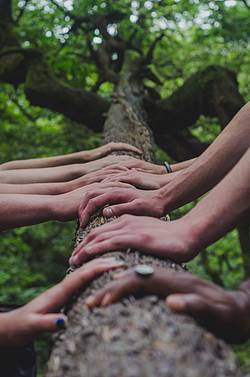 Photo showing hands on a tree. Photo by Shane Rounce on Unsplash
