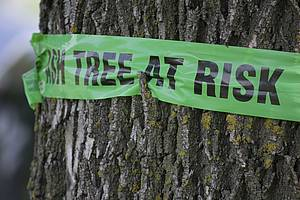 Photo showing a Sign on a tree warning of emerald ash borer damage
