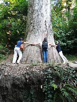 Photo showing Giant eucalyptus, the base of the trunk surrounded by participant of the 5th 2.09.02 Working Party Conference in Coimbra, Portugal, 2018. Photo: J.-F. Trontin.