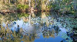 Photo showing Bitter Springs Mataranka, Northern Territory, Australia