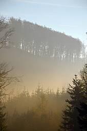 Photo showing forest landscape. Photo by Jana Kudrnova on Pixabay
