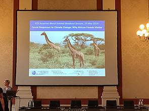 "Photo showing Opening of the Austrian World Summit Breakout Session ""Forest Responses to Climate Change: Why African Forests Matter"", Vienna 2019. Photo: Brigitte Burger, IUFRO."