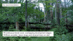 Photo showing What to do after a storm that has landed the trees of a forest to give strength to the ground and restore as quickly as possible in the woods? The recommendations of an Austrian expert on the subject: keep the ground covered as much as possible even leaving fallen trees in the woods.