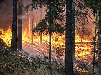 Photo showing a burning forest. Photo: 272447, Pixabay.