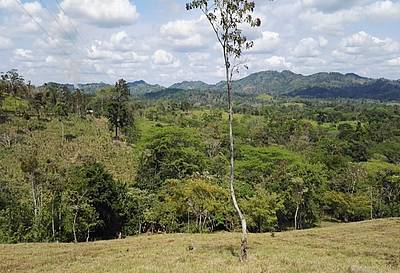 Photo showing Secondary forests in Costa Rica. Photo: Geoffrey Venegas, CATIE.