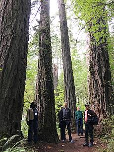 "Picture showing the excursion to the ""Oldgrowth"" stand at McDonald Forest, Corvallis, OR, USA; 2018. Copyright: Andreas Bolte"