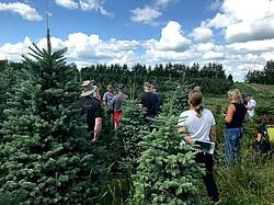 Photo showing IUFRO Christmas Tree Working Party participants visit hybrid fir plantations at Downey Nursery and Tree Farm (2019). Photo provided by Christmas Tree Working Party.