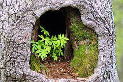 Photo showing plants in hollow tree. Photo by Mike Goad on Pixabay.