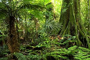 Photo showing tropical forest. Photo: iStock.