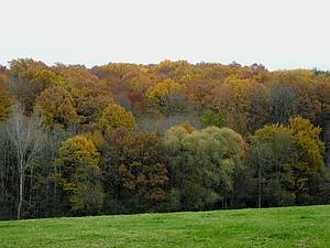 Photo showing Autumn leaves in a mixed-species forest of France. Photo by Damien Bonal, one of the co-authors of the review