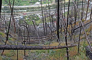 Photo showing burnt trees in a protection forest on a steep slope.