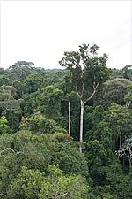 Photo showing Amazon forest. Photo by Nelson Grima