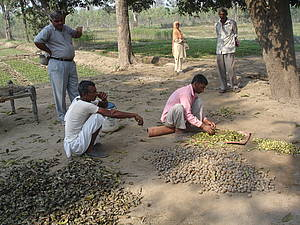 Photo showing Involvement of local people is key to successful forest landscape restoration (example from India). Photo credit: Michael Kleine, IUFRO.