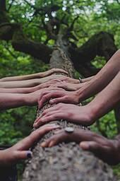 Photo showing women's hands on lying tree trunk. Photo: Shane Rounce on Unsplash.