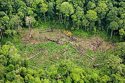 Photo showing Rainforest destruction from aerial view