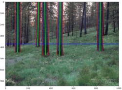 Photo showing A 3D machine vision technology developed to detect and measure tree characteristics real-time during thinning operations. (Credit: Lucas Wells, Oregon State University)