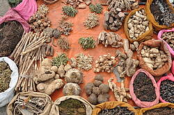Photo showing Medicinal plant market in Nasik, India. Photo by John Parrotta