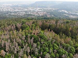 Photo showing: Mortality of Scots pine (Pinus sylvestris) near the city of Jena, Germany. Large tracks of pine stands have died following the 2018 drought in Central Europe despite the species' high drought tolerance. Photo by Henrik Hartmann
