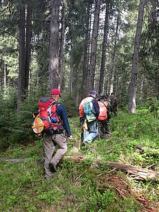 Photo showing Carpathian forests. Photo by Bill Keeton