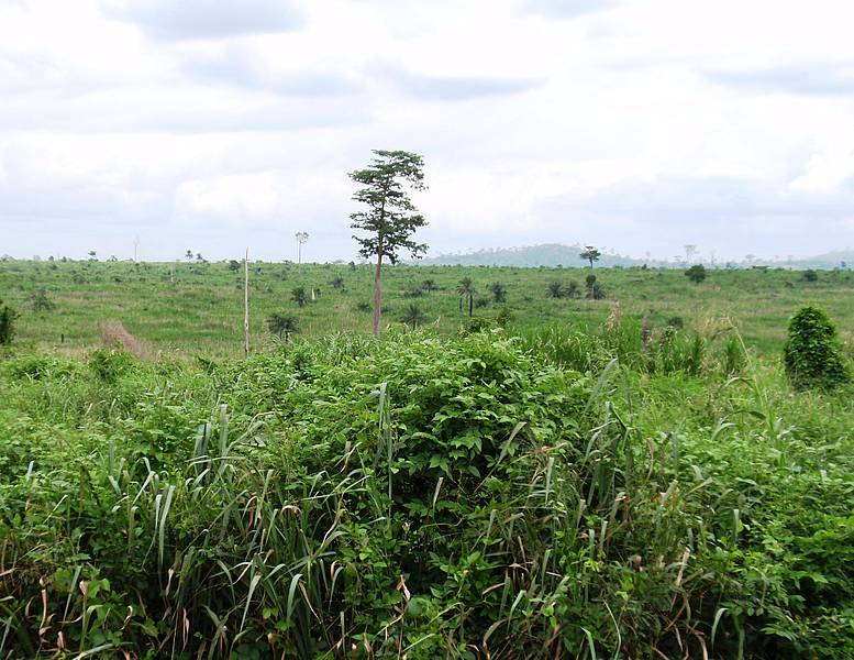 Photo showing deforestation in the tropics