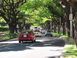 Photo showing a street with a car and trees along the road. Design of trees along streets is important to minimize trapping of pollutants along sidewalks and roads. Photo: David Nowak