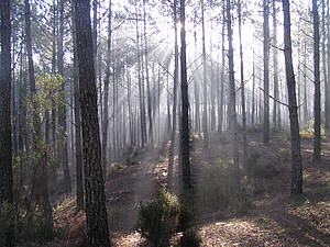 Photo showing a forest. Photo by IEFC.