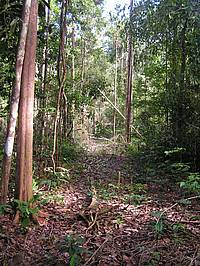 Photo showing Skidtrails open with Reduced Impact Logging techniques in East Para.