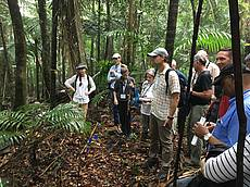 Photo showing Forest recovery after devastating radiation impact; El Verde field station of the U.S. Forest Service, International Institute of Tropical Forestry (IITF). Excursion within the International Conference on Forest Landscape Restoration under Global Change; San Juan (PR), USA, 8 June 2017 (Photo: A. Bolte)