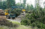 Skidder HSM 904Z with crane and grapple – 1