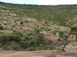 Photo showing Landscape in Ethiopia recovering from degradation. Photo: Ethiopian Environment and Forest Research Institute.