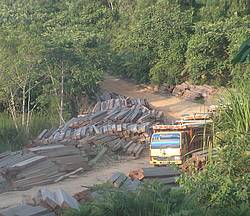Photo showing Large-scale timber trafficking from Indonesia to Malaysia in the interior of Borneo.