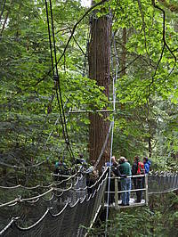 Photo showing a different view to the old growth forest: the Greenheart Tree Canopy Walk during the in-congress tour at the University of British Columbia campus at Point Grey Peninsula.