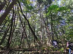 Photo showing Primary forest mixed by Korean pine with broadleaved tree species Tiger mountation (nature reserve); Vladivostok, September 2019. Photo: Hailong Shen.