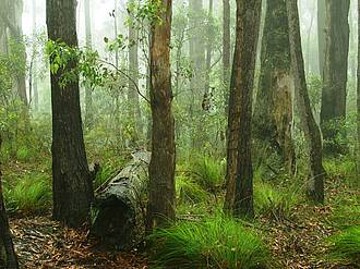 Photo showing several trees in a forest. Photo by Geoff Roberts, Australia
