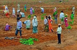 Photo showing Alignment and planting in SMM Komitibanda. Photo: Forest College & Research Institute, Telangana, India.