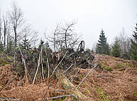 Photo showing storm damage trail in the Black Forest where storm Lothar heavily devasted forest areas in 1999.